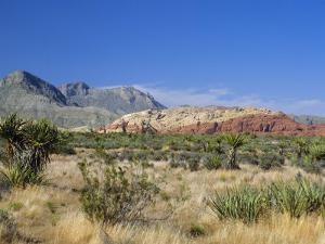 Red Rock Canyon, Spring Mountains, 15 Miles West of Las Vegas in the Mojave Desert, Nevada, USA by Fraser Hall