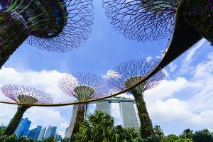 Supertree Grove in the Gardens by the Bay, a Futuristic Botanical Gardens and Park, Marina Bay by Fraser Hall
