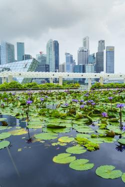 Water Lily Garden by the Artscience Museum with City Skyline Beyond, Marina Bay, Singapore by Fraser Hall