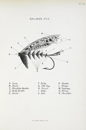 Salmon Fly. Fishing Tackle by Fraser Sandeman
