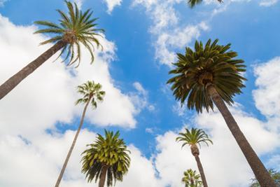 Amazing Palm Tree in Beverly Hills, California - USA by Frazao