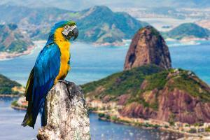 Blue and Yellow Macaw in Rio De Janeiro, Brazil by Frazao