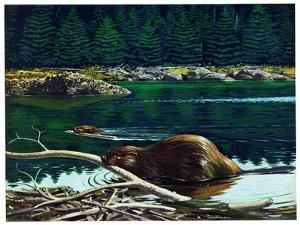 Lowland Beaver by Fred Ludekens