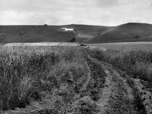 Pewsey White Horse by Fred Musto