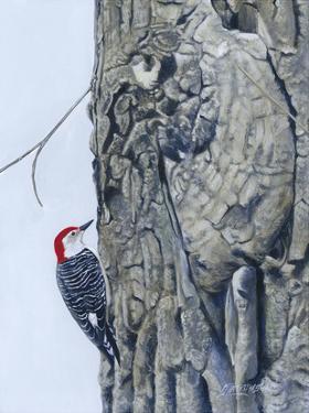 Red Bellied Woodpecker I by Fred Szatkowski