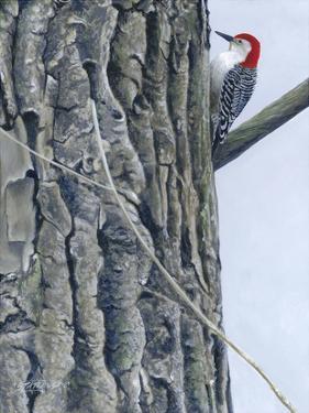 Red Bellied Woodpecker II by Fred Szatkowski