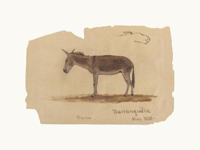 A Donkey, Barranquilla, Colombia by Frederic Edwin Church