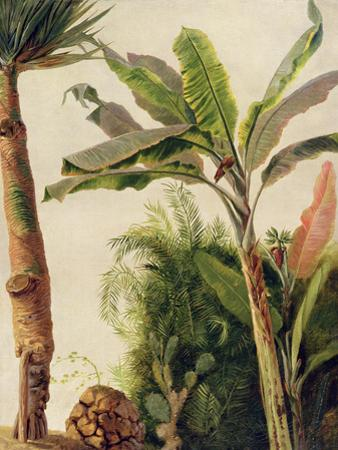 Banana Tree, C.1865 by Frederic Edwin Church