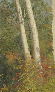 Birch Trees in Autumn by Frederic Edwin Church