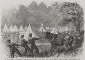 The War in America, Quartermaster's Department, Killing Bullocks in the Federal Camp, Virginia by Frederick John Skill