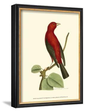 Crimson Birds III by Frederick P. Nodder