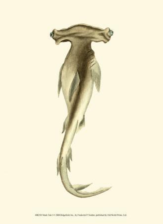 Shark Tale I by Frederick P. Nodder
