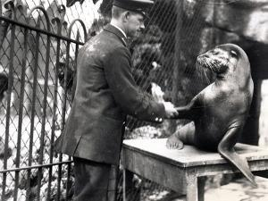 A Keeper and Sea Lion Shake Hands in 1931 by Frederick William Bond