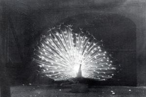 White Peacock by Frederick William Bond