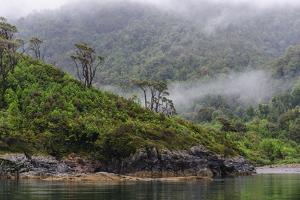 Chile, Patagonia, Lake District, Pumalin National Park. Valdivian rainforest by Fredrik Norrsell