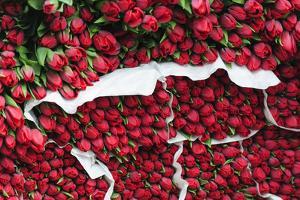 Tulips for Sale at a Street Vendor, Copenhagen, Sjaelland, Denmark by Fredrik Norrsell