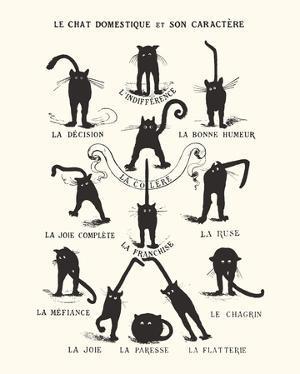 French Caractere Le Chat Domestique et son Caractere