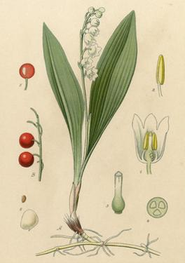 French Herbal