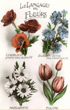 French Language of Flowers