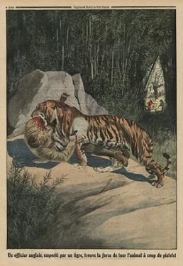 Tiger Attacking a British Officer, Back Cover Illustration from 'Le Petit Journal' by French