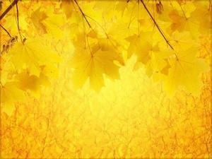 Autumn Background by frenta