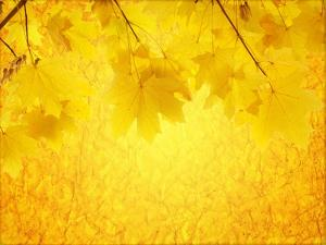 Autumn Background by frenta