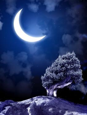 Night Fairy-Tale. Bright Moon and Tree by frenta