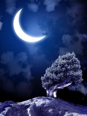 Night Fairy-Tale. Bright Moon and Tree by frenta