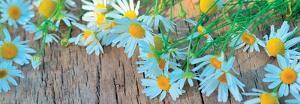 Fresh Flowers on the Wooden Table