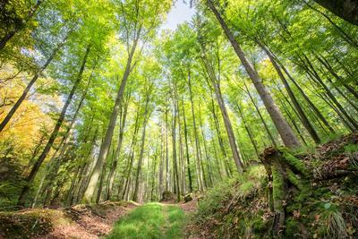https://imgc.allpostersimages.com/img/posters/fresh-greens-and-a-grassy-path-in-a-light-filled-german-forest-baden-wurttemberg-germany-europe_u-L-Q12SBX20.jpg?p=0