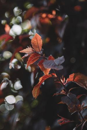 https://imgc.allpostersimages.com/img/posters/fresh-red-foliage-of-the-copper-beech-in-the-spring_u-L-Q1EXNJT0.jpg?artPerspective=n
