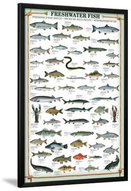 Fresh Water Fish Educational Poster