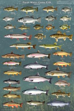 Affordable Fish Posters For Sale At AllPosters