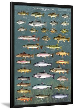 Fresh Water Game Fish