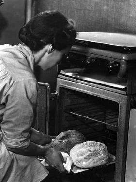 Freshly Baked Loaves