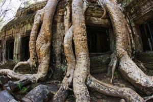 Angkor Wat by Friday