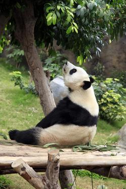 Big Panda by Friday