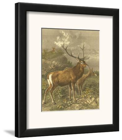 Small Red Deer