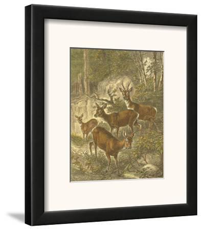 Small Roe Deer