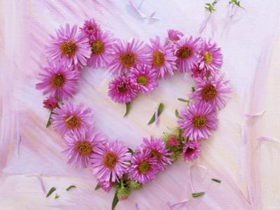 Heart of Pink Asters