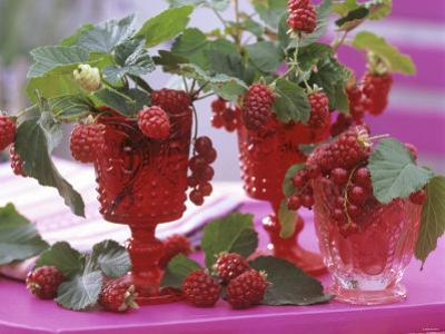 Small Bouquets of Raspberries and Redcurrants