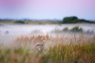 Hide and seek by Frits Hoogendijk