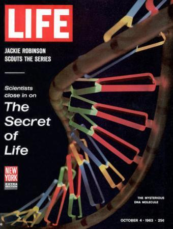 Partial DNA Helix Model, Advances in Gene Research, October 4, 1963