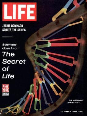 Partial DNA Helix Model, Advances in Gene Research, October 4, 1963 by Fritz Goro