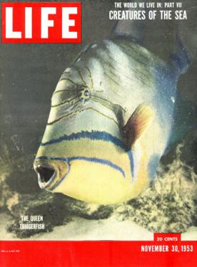Queen Triggerfish, The World We Live In: Creatures of the Deep, November 30, 1953 by Fritz Goro