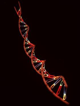 Representation of Segment of DNA Molecule Whose Order Spells Out Exact Set of Genetic Instructions by Fritz Goro