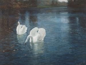 Swans on the River, C.1880 by Fritz Thaulow