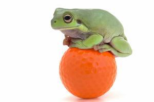 Frog on a Golf Ball