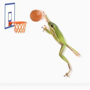 Frog Playing Basketball