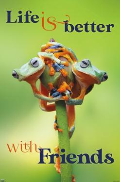 Frogs - Duo